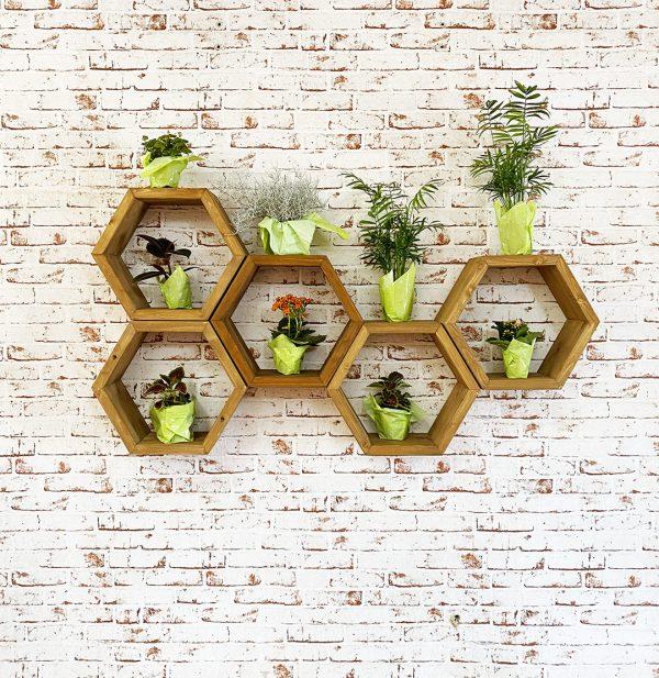 scaffale pensile in legno da muro con piantine