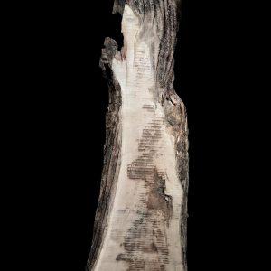 Asse in legno grezzo di castagno segato da tronco H230 L60-50 P8 Ilary