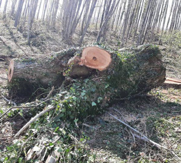 tronco legno albero segato per tavolo sala da pranzo xlab design