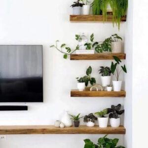 Mensole da parete in legno massello porta TV con piante verdi da interno